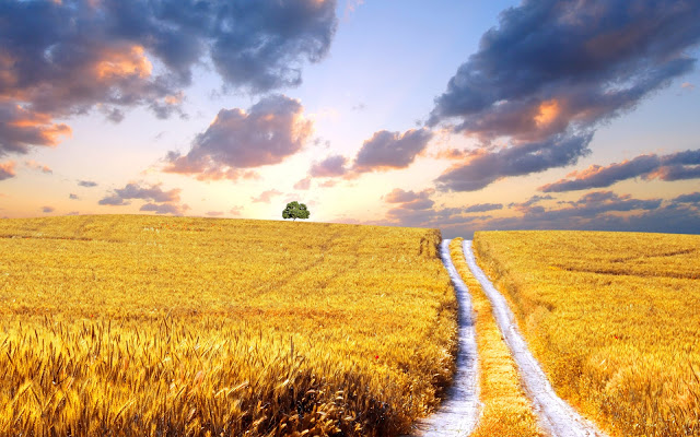 006-symbol-ukraine-wheat-fields